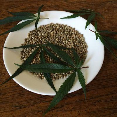 semillas de cannabis